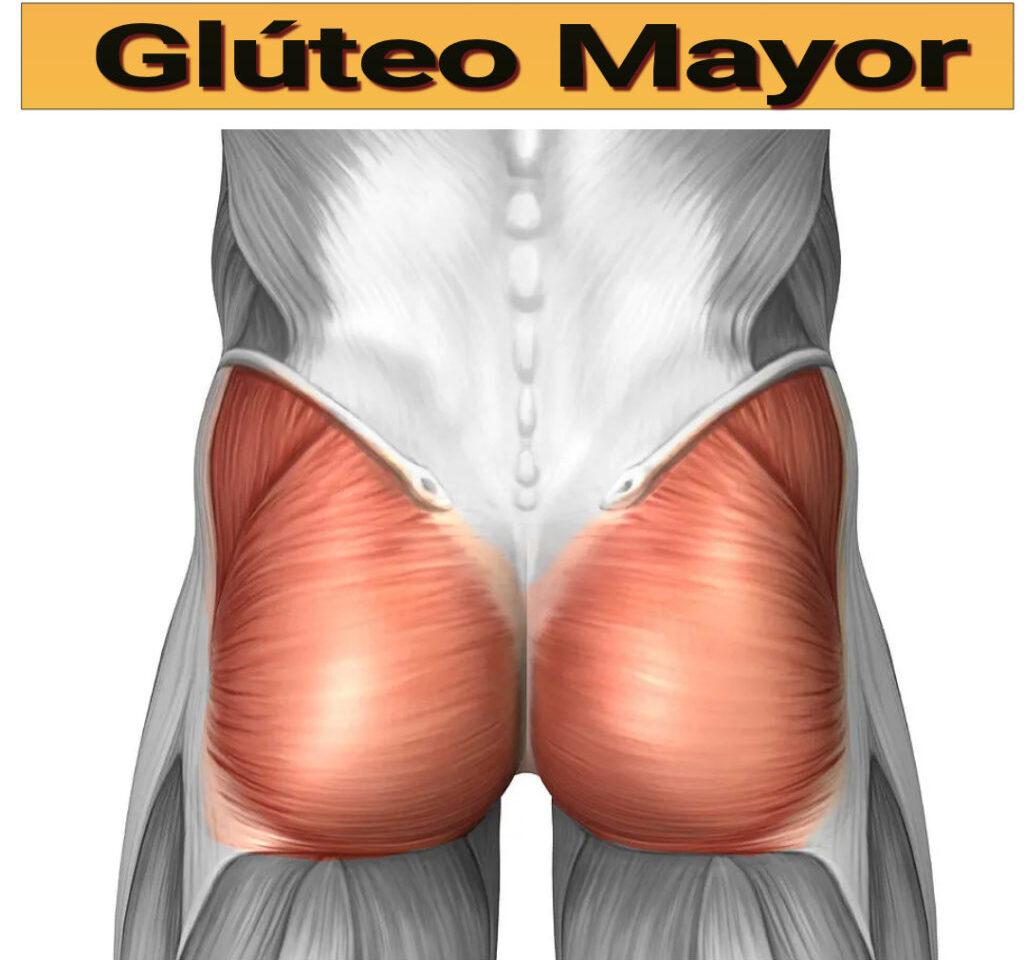 Glúteo-Mayor-3