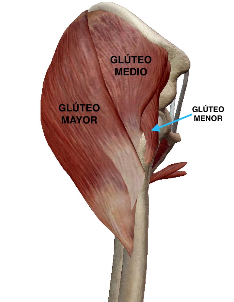 Glúteo-Mayor-5
