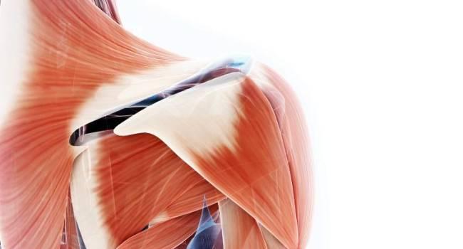 Músculo Esquelético